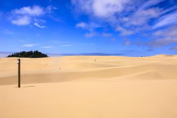 Sand Dunes in the Jessie M. Honeyman Memorial State Park in Oregon, USA