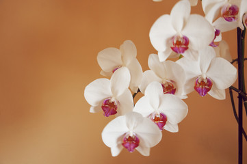 nice orchid on an orange background