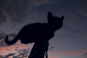 Silhouette  of a cat on sunset background. Close-Up Of Silhouette Cat Against Sky During Sunset.