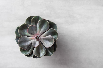 Succulent or cactus pot on gray concrete table