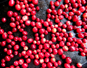 Fresh cranberries, isolated on a black background.