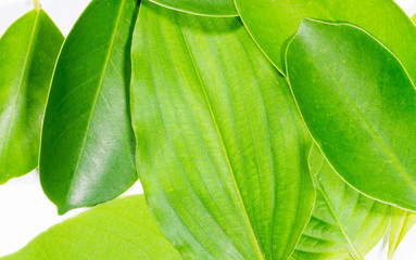 Green leaves natural background  wallpaper