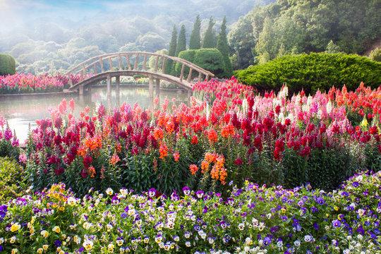 Garden flowers on the mountain in Thailand