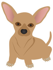 Chihuahua Dog vector Illustration
