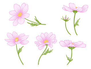Cosmos flowers. Set of colored flowers.