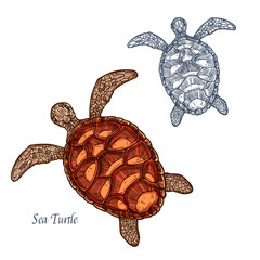 Sea turtle vector isolated sketch icon