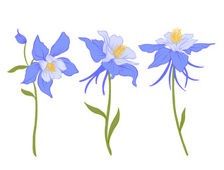 Columbine, aquilegia, flowers. Set of colored flowers.