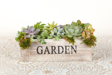"Succulent plants arrangement in a wooden box ""garden"""