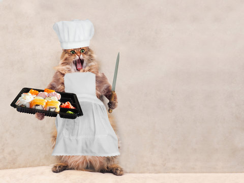 The big shaggy cat is very funny standing,cook 10
