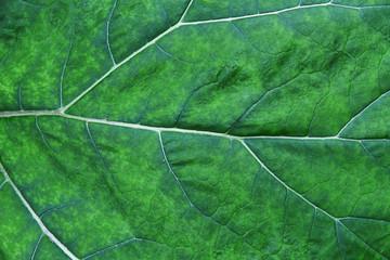 Burdock leaf. Macro, background