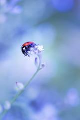 Coccinella su non fiore