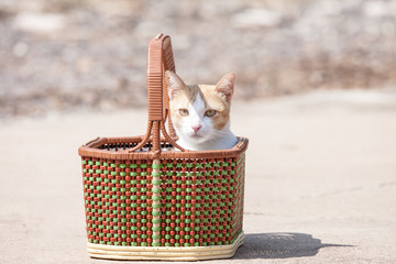 The cat is misbehave in basket