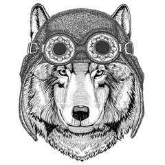Wolf Dog wearing aviator hat Motorcycle hat with glasses for biker Illustration for motorcycle or aviator t-shirt with wild animal