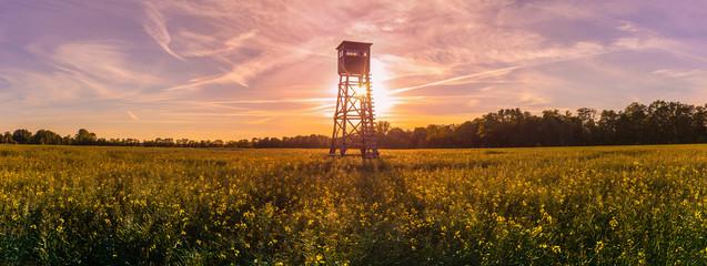 Jagd Jäger Hochsitz im Morgenlicht, Panorama, Rapsfeld Landleben Weidwerk Forstwirtschaft Ackerbau