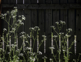 Flowers on fence backdrop