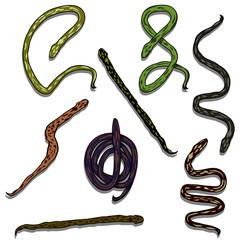 Snake reptile set