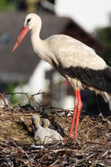 Storch + Babys