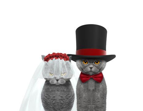 Cat happy wedding. Isolated on white