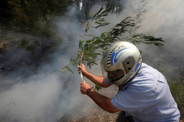 A man wears a helmet as he uses a branch with leaves to try to put out flames from a forest fire in Castanheira de Pera