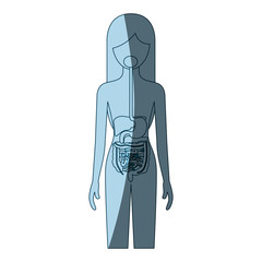blue color shading silhouette female person with digestive system human body vector illustration