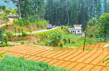 Sri Lankan farms