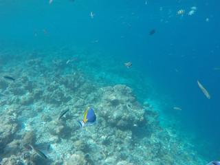 Underwater Life Maldives