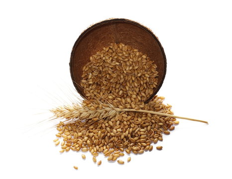 ear of wheat and grain in coconut shell, bowl isolated on white background