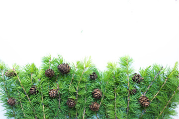 Frame, background with christmas tree branches and cones. Top view. The design element to design web banners, postcards. Christmas, winter pattern.