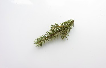 Branch of Christmas tree on white background. Top view. The design element to design web banners, postcards. Christmas, winter pattern.
