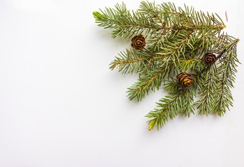 Branch of Christmas tree and cones on white background. Top view. The design element to design web banners, postcards. Christmas, winter pattern.