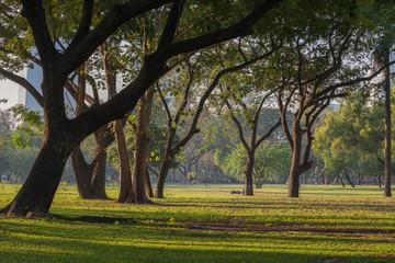 Beautiful morning scene in the park at Bangkok. Thailand.