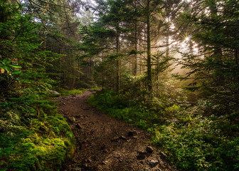 light rays along hiking path, roan mountain, tennessee