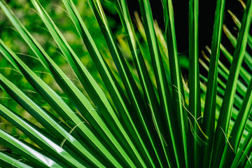 Palm branch close-up. Shooting at night, dark black background. The green leaves are lit by the light of a street lamp. Wallpaper, backdrop or background for design.