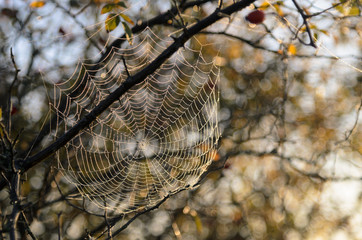 Spider web covered with dew drops during Indian summer in Hortobagy National Park, Hungary