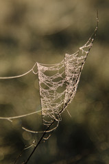 Spiderweb on a twig covered with dewdrops in Hortobagy National Park, Hungary