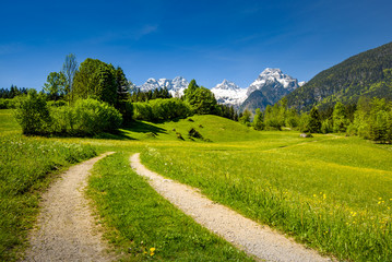 Scenic alpine landscape, blooming meadow with snow-covered peaks in the background, Salzburger Land, Austria Wall mural