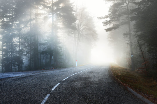 Asphalt road (highway) through the evergreen pine forest in a white fog. French Alsace, France. Atmospheric autumn landscape. Travel destinations, vacations, freedom, ecotourism, pure nature