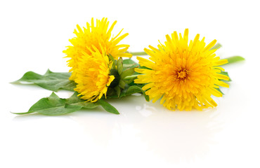 Three dandelions with leaves.
