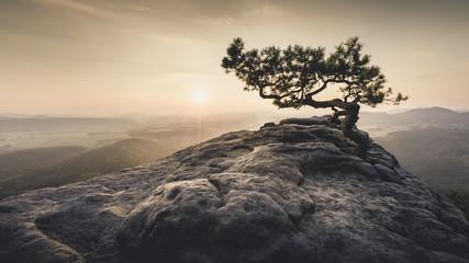 Sächsische Schweiz - Alte Kiefer zum Sonnenaufgang