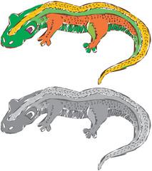 Abstract Newt Lizard Illustration Vector