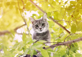 cute funny tabby kitten climbed a tree in summer garden on Sunny