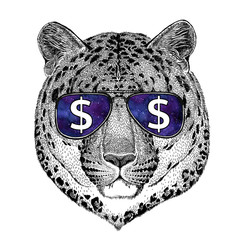 Wild cat Leopard Cat-o'-mountain Panther wearing glasses with dollar sign Illustration with wild animal for t-shirt, tattoo sketch, patch