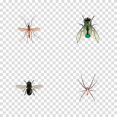 Realistic Gnat, Spider, Midge And Other Vector Elements. Set Of Bug Realistic Symbols Also Includes Fly, Alive, Mosquito Objects.