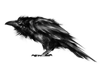 Wall Mural - painted black Raven on a white background