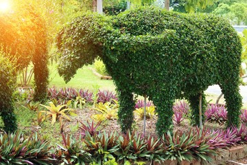 Select focus,Bushes the shape of buffalo in the park with lens flare effect