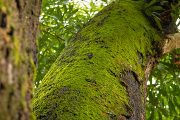 Tree with moss on trunk