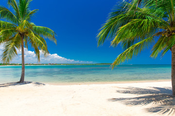 Foto op Plexiglas Caraïben tropical beach