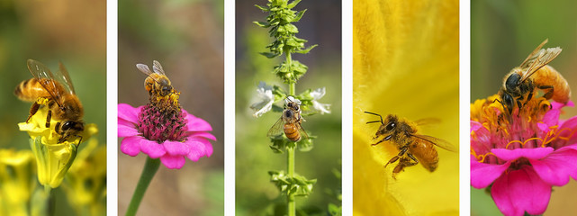 Panoramic nature bee montage background banner