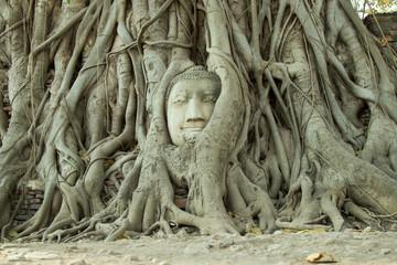 buddha head surround by root tree at Ayutthaya