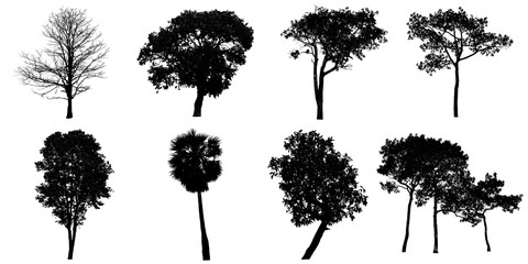 Silhouette tree on white background.